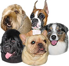 all our breeds of dogs, cats, horses, goats and iguanas too